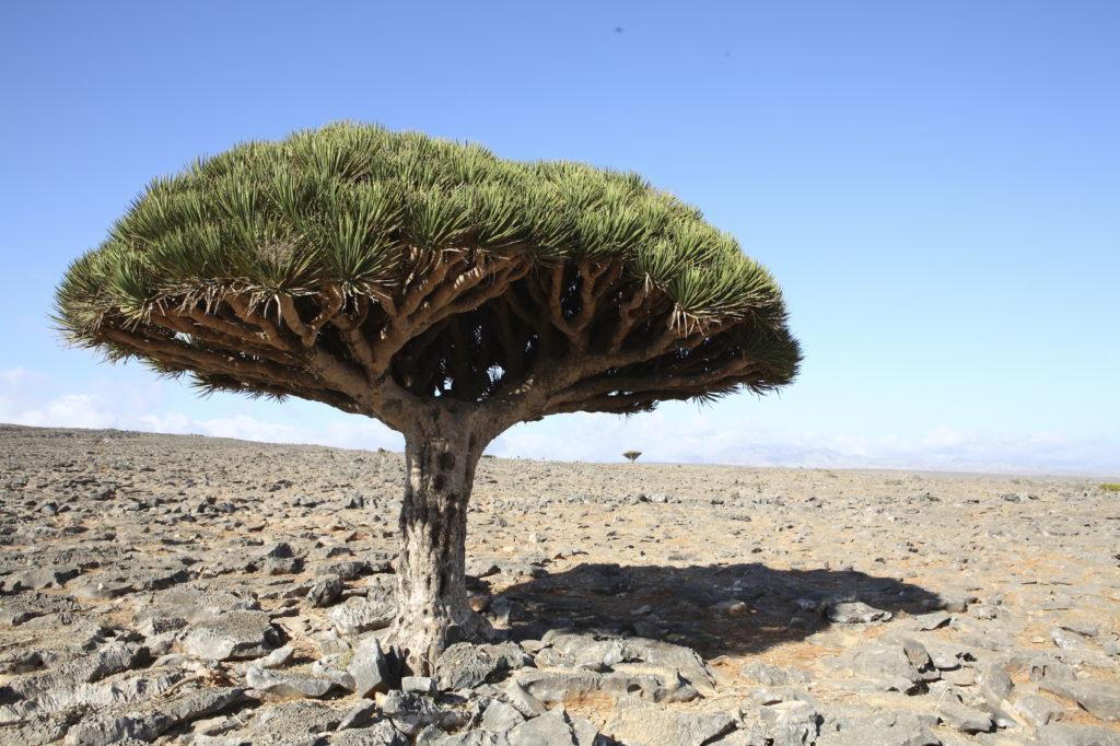 『ソコトラ諸島』(イエメン共和国)