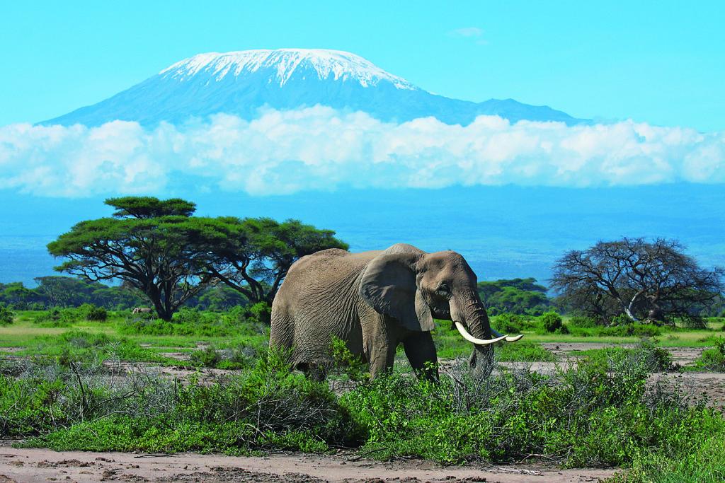 キリマンジャロ国立公園(タンザニア連合共和国)自然遺産