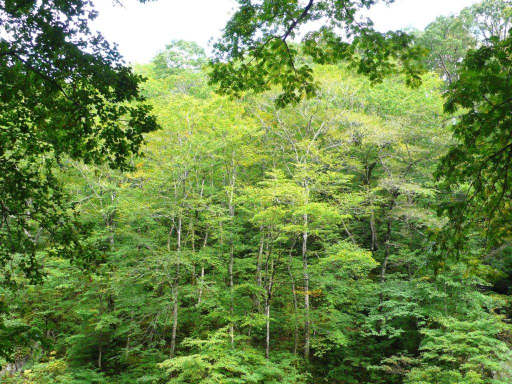 『白神山地』(日本国)
