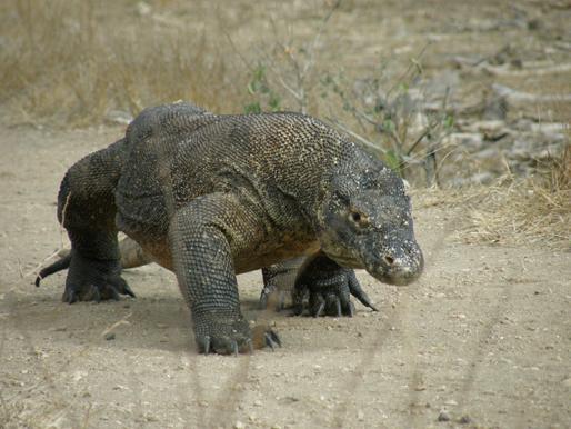 『コモド国立公園』(インドネシア国)自然遺産