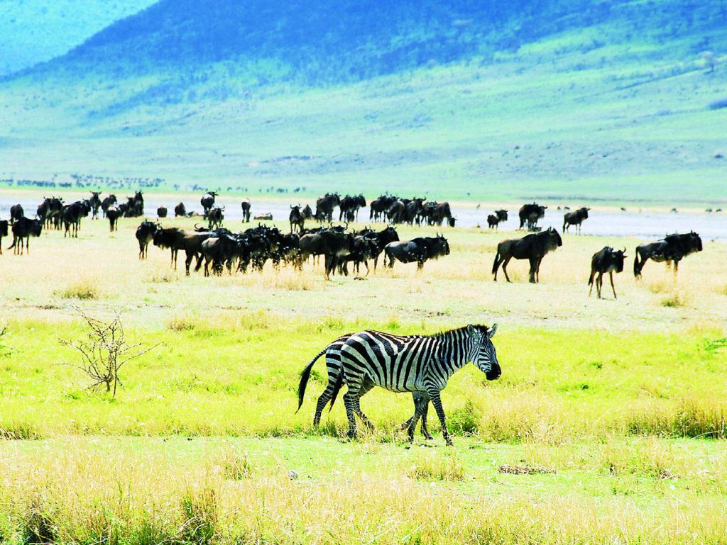 ンゴロンゴロ自然保護区(タンザニア共和国)