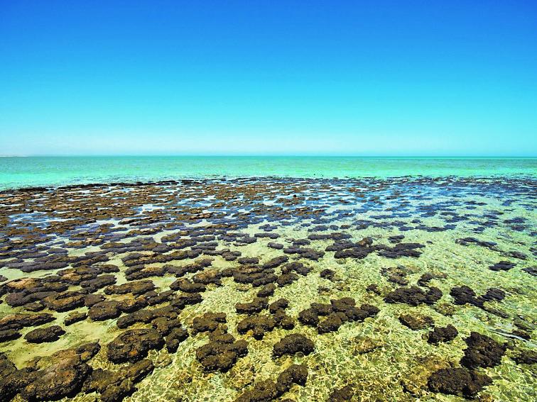 シャーク湾(オーストラリア連邦)